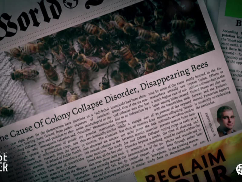 A Bee-Crisis could be the end. Colony Collapse Disorder - a life without bees - by SPURGO.de