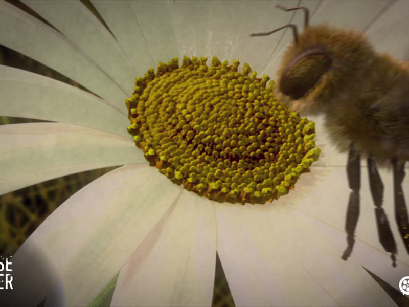 Watch and share the movie now. Colony Collapse Disorder - a life without bees - by SPURGO.de