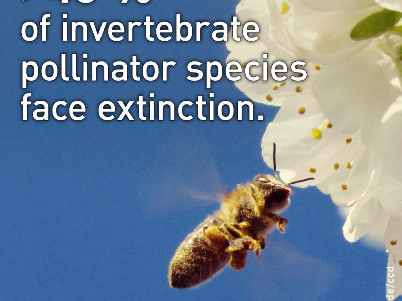 +40 of invertebrate pollinator species face extinction.