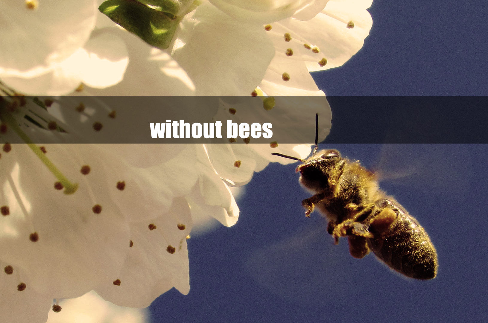 """Further Information about """"Colony Collapse Disorder – a life without bees"""""""