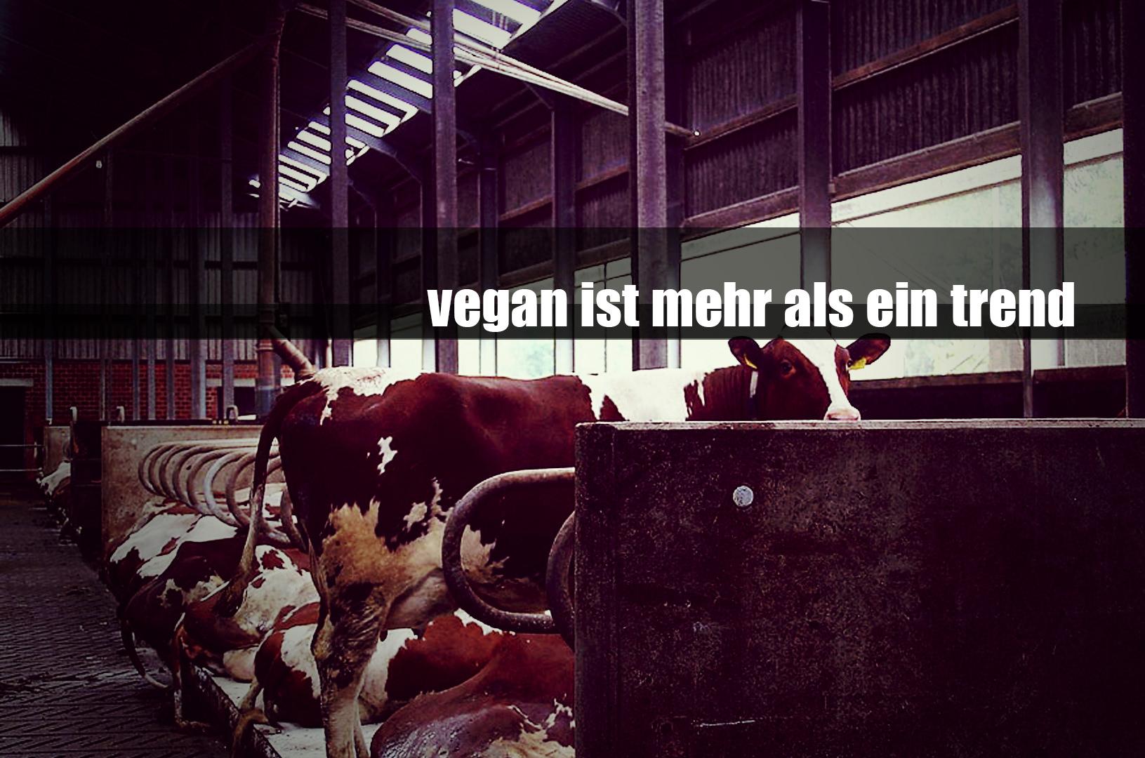 Vegan ist mehr als nur ein Trend …